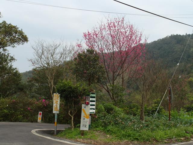 風露嘴山 (96).JPG