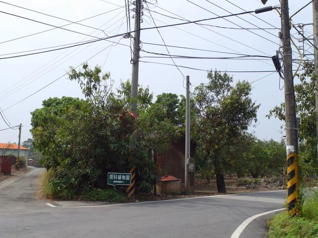 蘭科植物園  (3).JPG