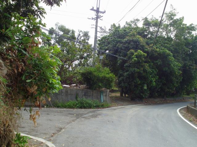 蘭科植物園  (7).JPG