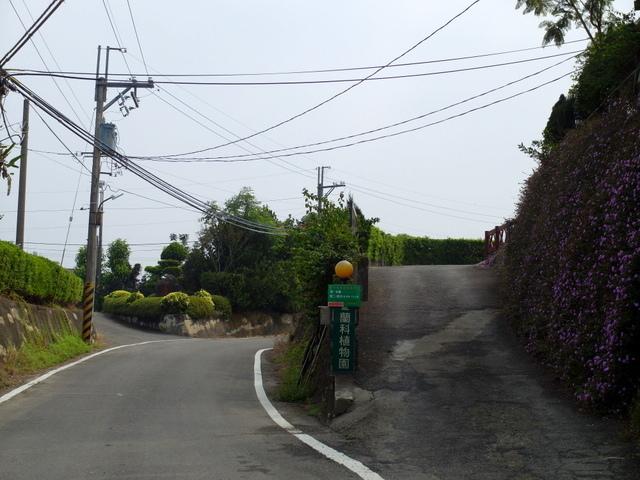 蘭科植物園  (8).JPG