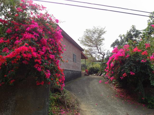 蘭科植物園  (9).JPG