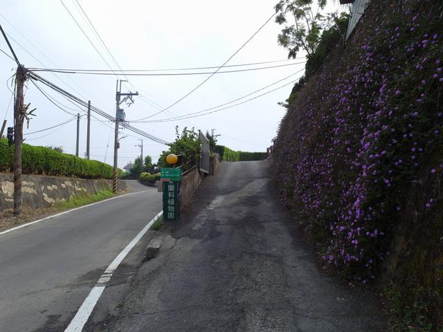 蘭科植物園  (10).JPG