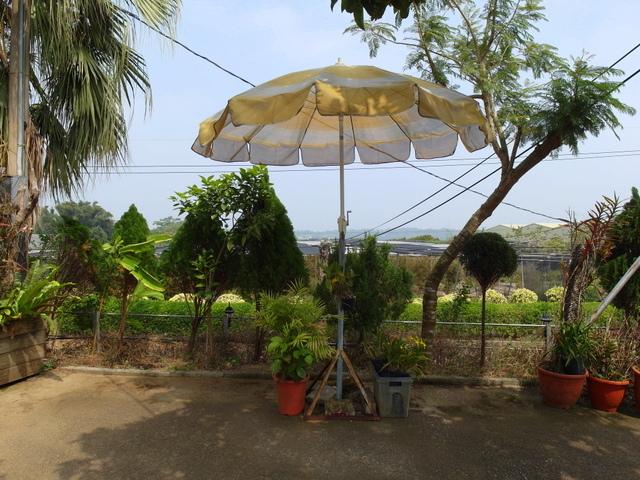 蘭科植物園  (12).JPG