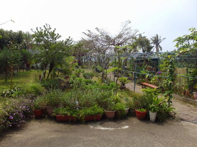 蘭科植物園  (14).JPG