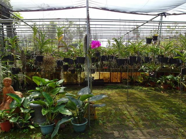 蘭科植物園  (17).JPG