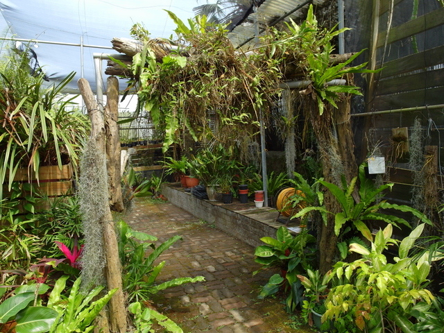 蘭科植物園  (18).JPG