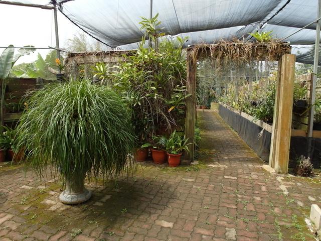 蘭科植物園  (19).JPG