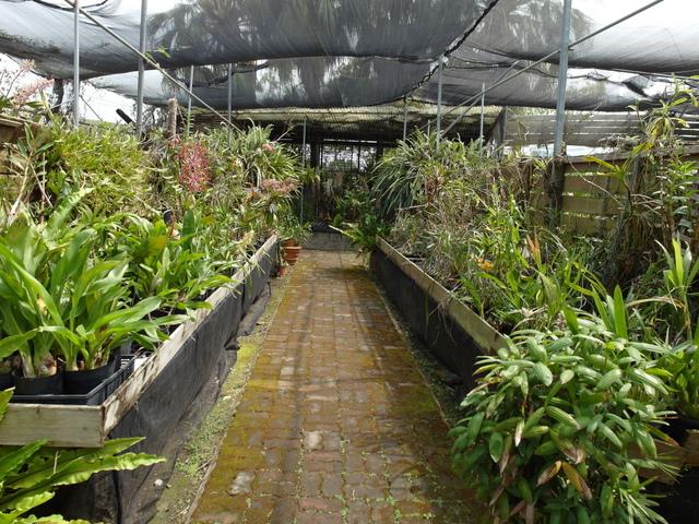 蘭科植物園  (20).JPG