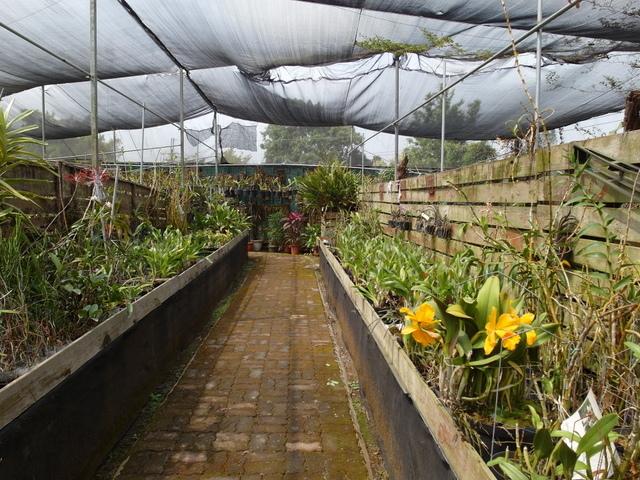 蘭科植物園  (21).JPG