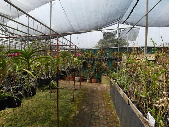 蘭科植物園  (22).JPG