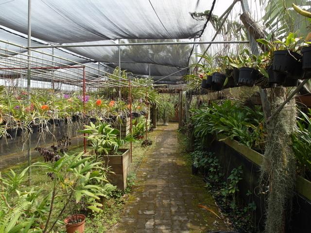 蘭科植物園  (23).JPG
