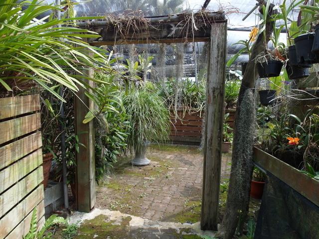 蘭科植物園  (24).JPG