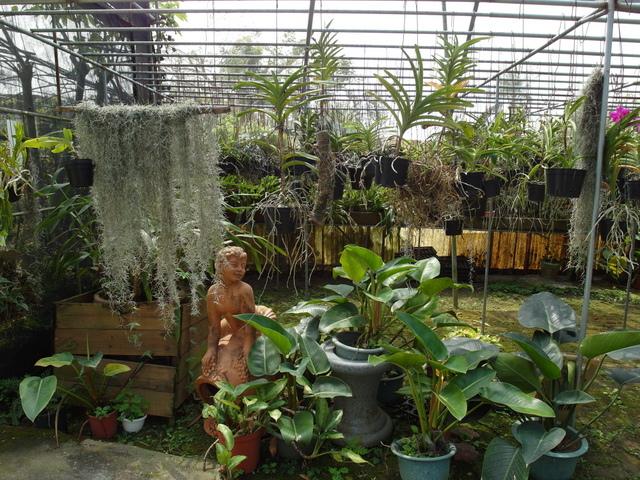 蘭科植物園  (25).JPG