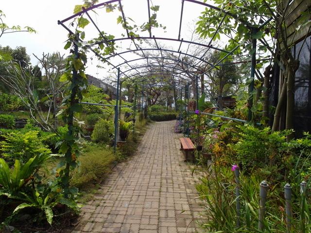 蘭科植物園  (26).JPG