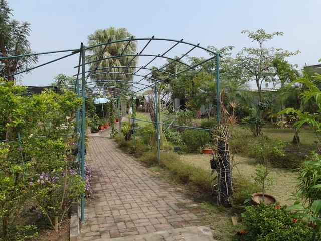 蘭科植物園  (29).JPG