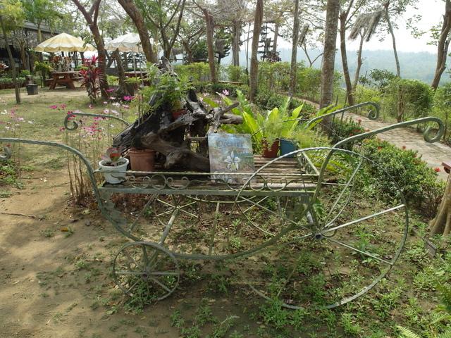 蘭科植物園  (31).JPG