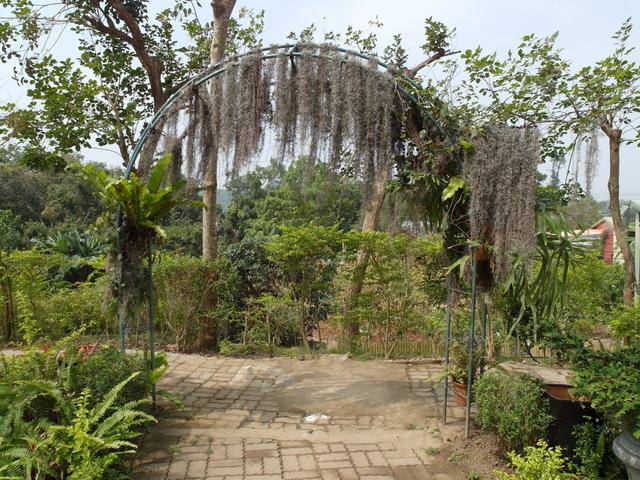 蘭科植物園  (32).JPG