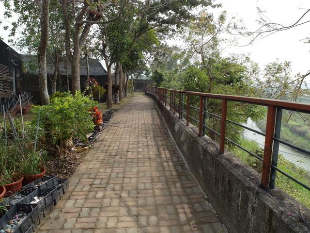 蘭科植物園  (36).JPG