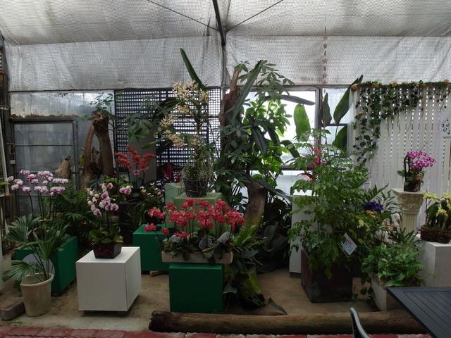 蘭科植物園  (45).JPG