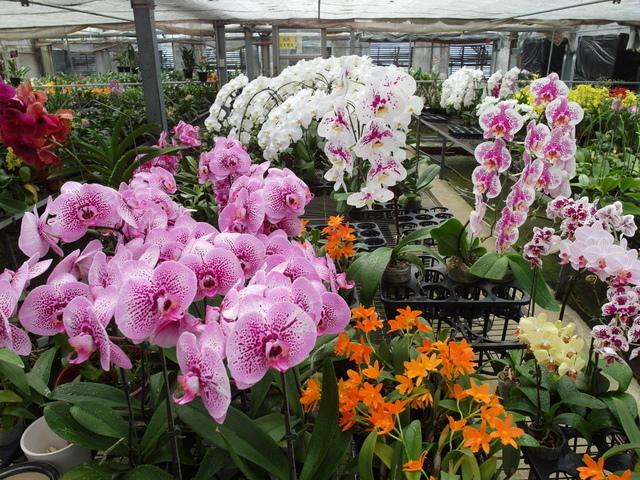 蘭科植物園  (47).JPG