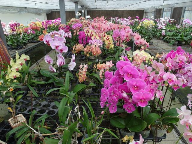 蘭科植物園  (48).JPG