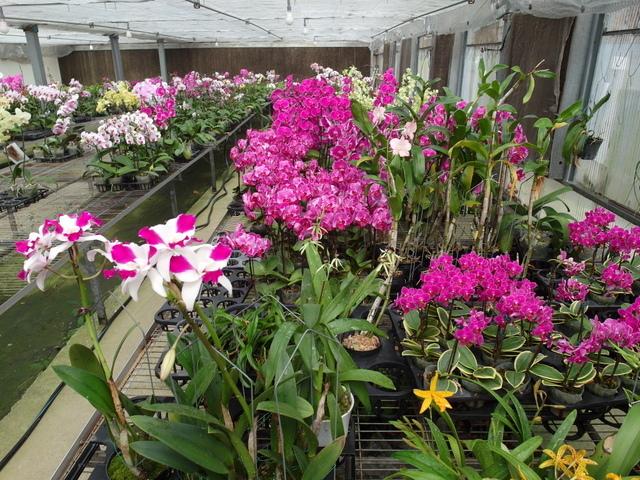 蘭科植物園  (49).JPG