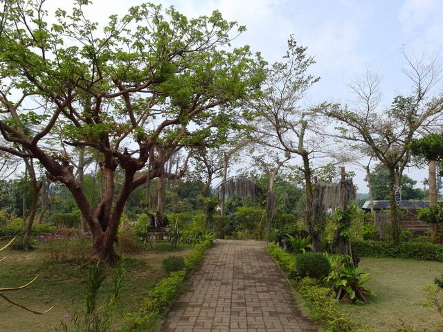 蘭科植物園  (53).JPG
