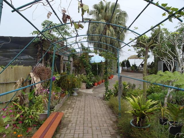蘭科植物園  (55).JPG
