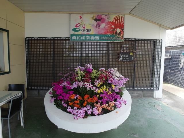 蘭科植物園  (58).JPG