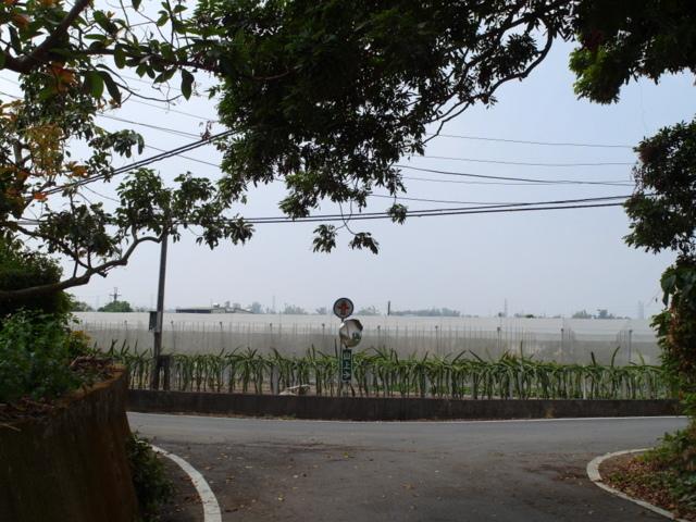 蘭科植物園  (61).JPG