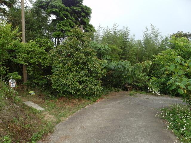 關刀山 (206).jpg