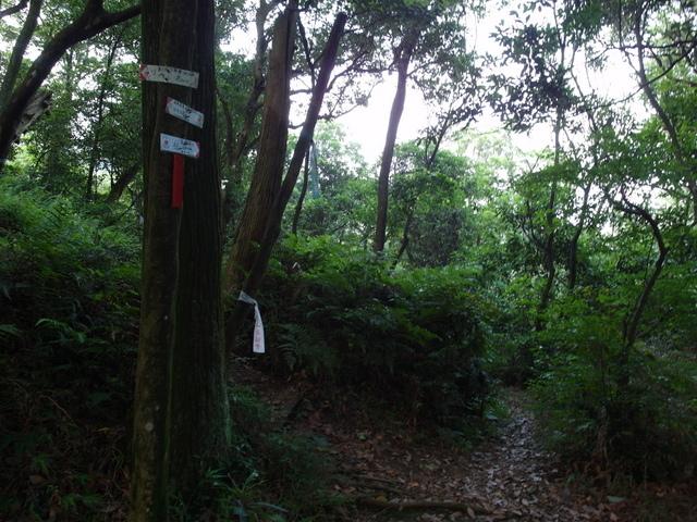 富士坪古道 (62).JPG
