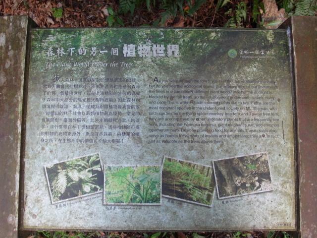 紗帽山 (91).JPG