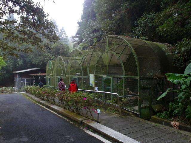 鳳凰鳥園 (14).JPG