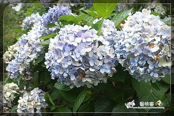 [新竹尖石]6號花園
