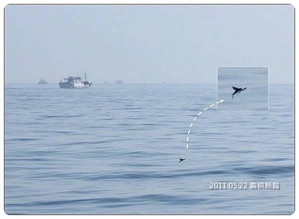 飛魚.jpg