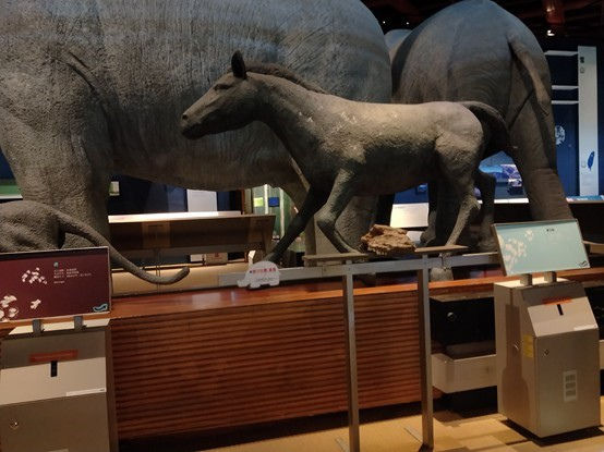 台灣史前文化博物館_190105_0056.jpg