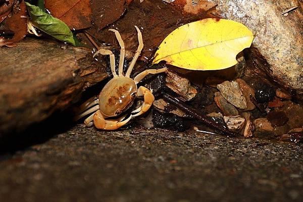 小雨蛙生態農場_190106_0001.jpg