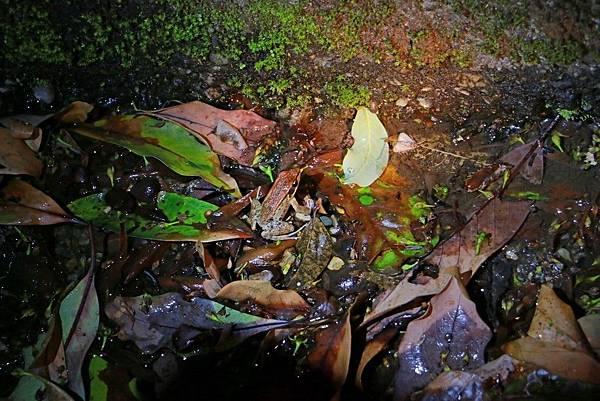 小雨蛙生態農場_190106_0006.jpg