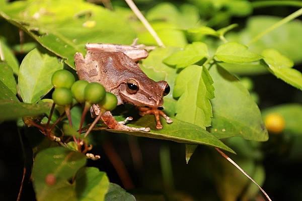 小雨蛙生態農場_190106_0003.jpg