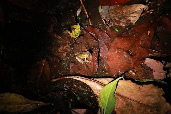 小雨蛙生態農場_190106_0008.jpg