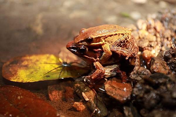 小雨蛙生態農場_190106_0002.jpg