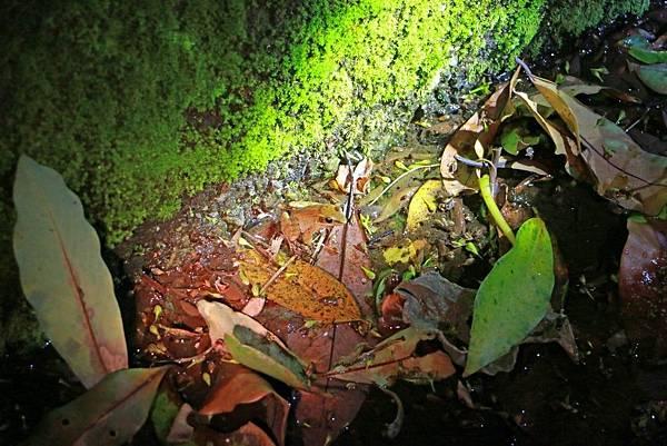 小雨蛙生態農場_190106_0007.jpg