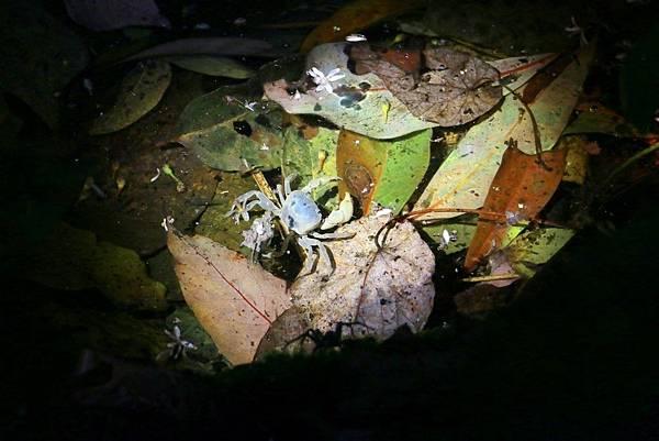 小雨蛙生態農場_190106_0004.jpg