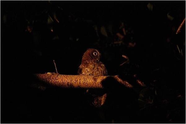 蘭嶼夜觀_190108_0031.jpg