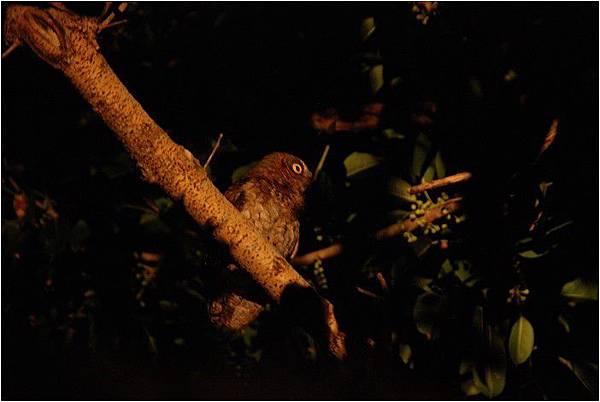 蘭嶼夜觀_190108_0032.jpg