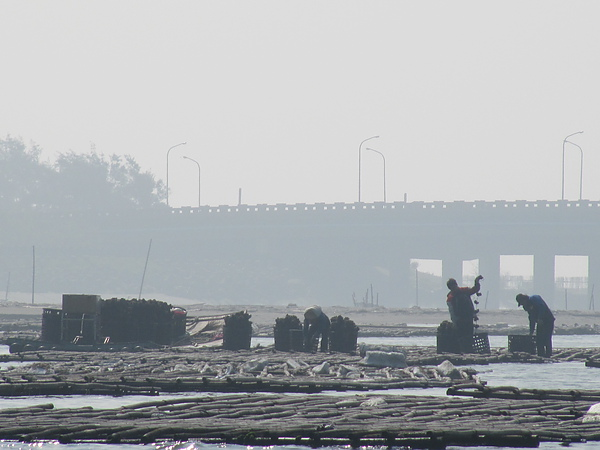 台江風光15.JPG