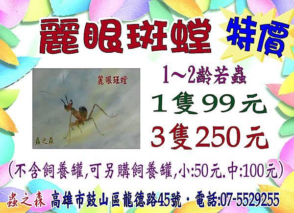 麗眼螳螂99元