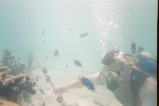 me-scuba-diving-feeding.jpg