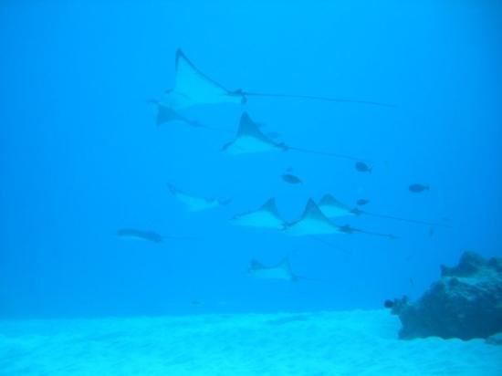 saipan diving 3.jpg